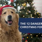 The 12 Dangers of Christmas for Pets
