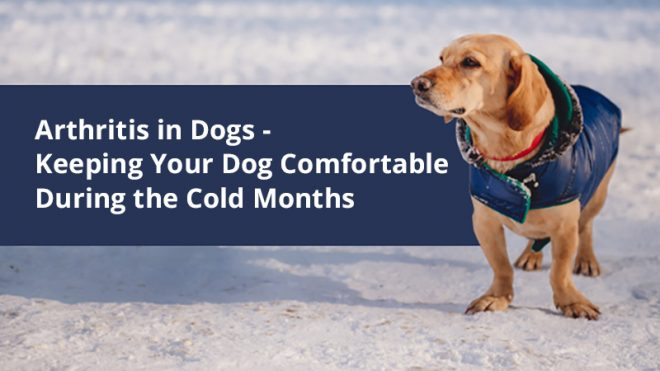 Arthritis in Dogs - Keeping Your Dog Comfortable During the Cold Months